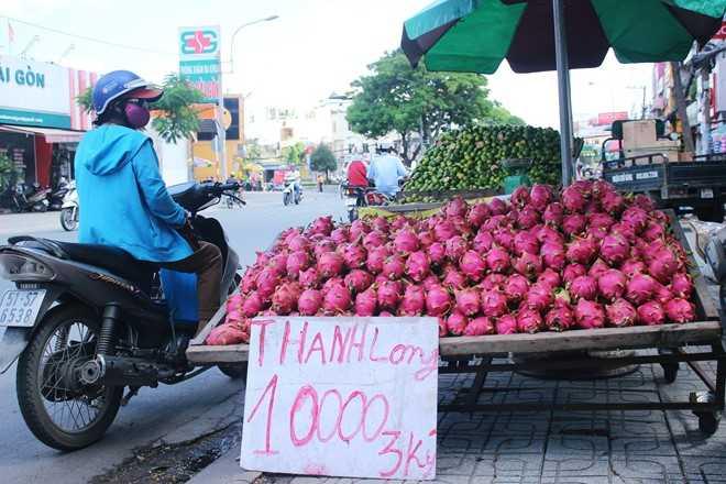 Thanh long do dong le duong Sai Gon gia 200 dong/kg tai vuon hinh anh 1