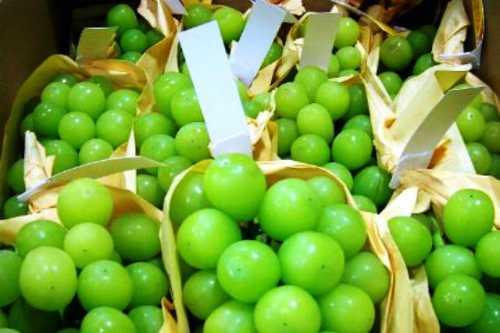 Nho mẫu đơn Nhật đầu mùa có giá tới 3 triệu đồng một kg.