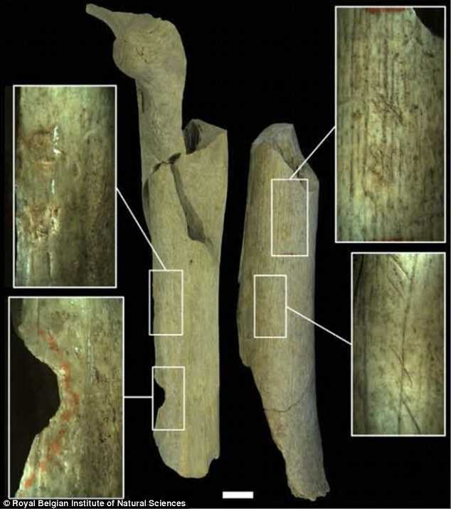 360319F600000578-3677856-Various_categories_of_human_action_upon_the_Neandertal_bones_of_-m-25_1467843471041
