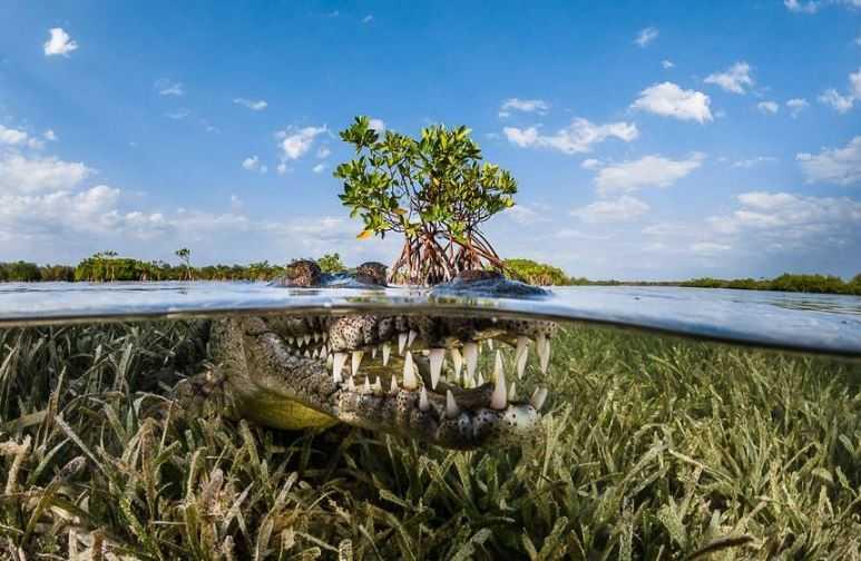 20161104141814Crocodile