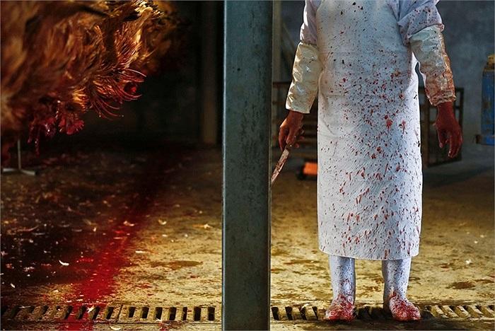 Một nhân viên giết mổ gà ở thành phố Thượng Hải, Trung Quốc