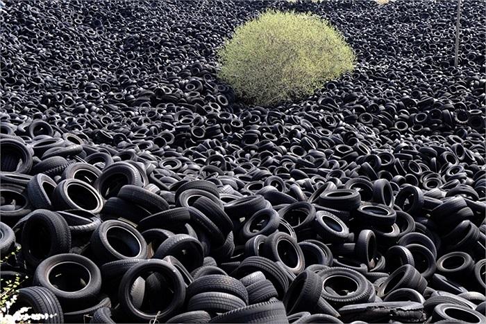 Cây mọc trong đống lốp xe ở Pháp