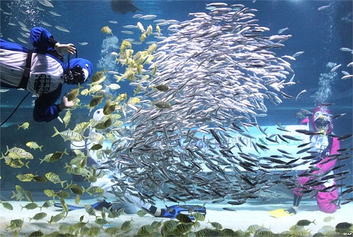 Thợ lặn trong trang phục như các chú chim cánh cụt biểu diễn giữa đàn cá trong bể cá Coex Aquarium trong chương trình mừng Năm Mới và kỳ nghỉ mùa đông ở Seoul, Hàn Quốc