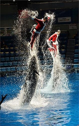 Huấn luyện viên trong trang phục ông già Noel biểu diễn với cá heo tại thủy cung Aqua Stadium tại Tokyo, Nhật Bản