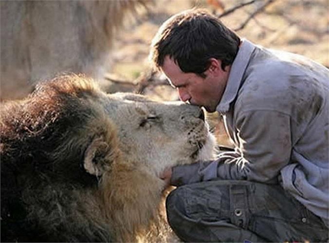 Nhà động vật học Kevin Richardson, một người Nam Phi, nói rằng ông dựa vào bản năng để chiếm cảm tình và tạo mối quan hệ thân thiết với những con sư tử.