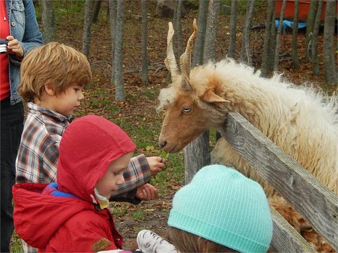Những nông dân Rumani cố gắng nói chuyện và lắng nghe gia súc của họ trả lời. Nếu không nghe được gì họ mới có được sự hạnh phúc, no ấm trong năm mới.
