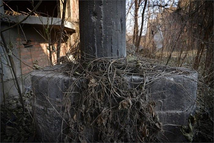 Cỏ dại, cành cây khô mọc khắp nơi. Mặc dù, dự án này nằm ở gần đường cao tốc nhưng lại không có một bóng người nào