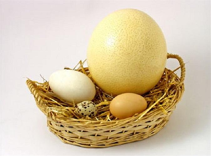 Trứng là những sản phẩm chăm sóc da tuyệt vời. Có rất nhiều lời khuyên cho rằng mặt nạ trứng là phương pháp điều trị tốt để phục hồi da, giúp thu hẹp lỗ chân lông, săn chắc da và ngăn chặn mụn.