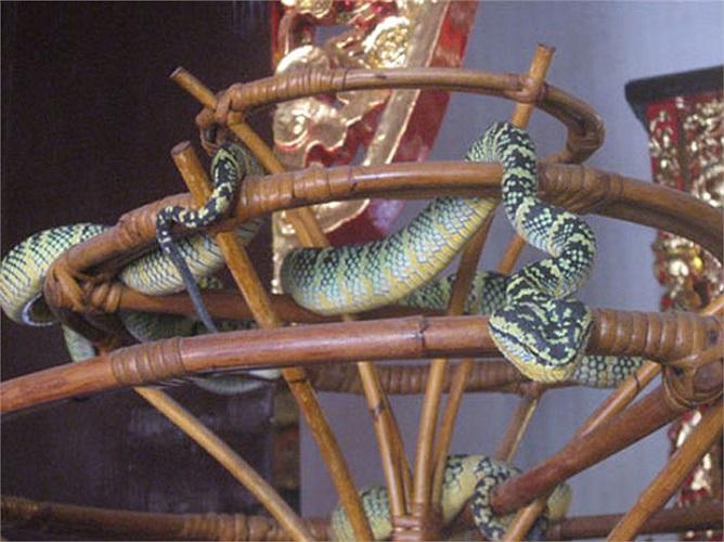 Người Malaysia tin rằng, loài rắn có mặt ở đền là để bảo vệ, giữ gìn sự tôn nghiêm.