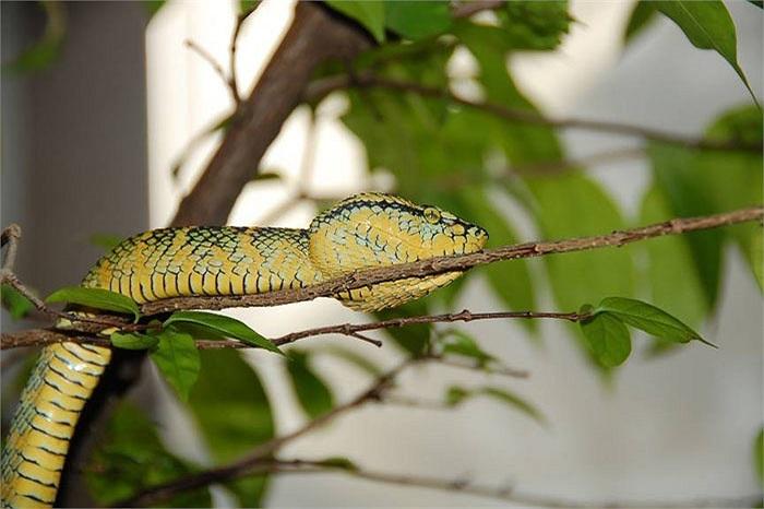 Ban ngày, cả trăm con rắn nắm im một chỗ, mở mắt quan sát những du khách vào đền. Chúng không nhúc nhích, không trườn đi nơi khác, dù có tìm cách đuổi chúng.
