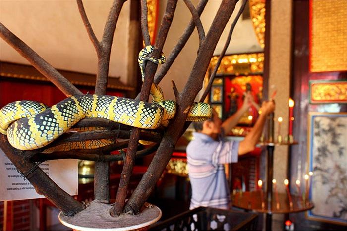 Khi màn đêm buông xuống, là lúc bọn rắn tìm đồ ăn. Chúng bò lổm ngổm khắp đền kiếm ăn. Đồ ăn là những thứ người dân dâng cúng.