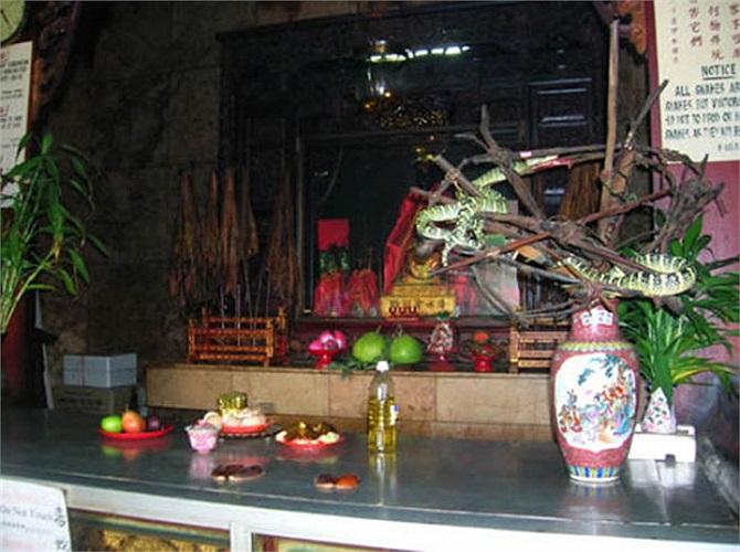 Người dân khắp nơi đổ về ngôi đền này để được chiêm ngưỡng các loài rắn độc bám vắt vẻo trên xà nhà, đậu trên cây, chui vào bình hoa, bàn thờ, tượng.