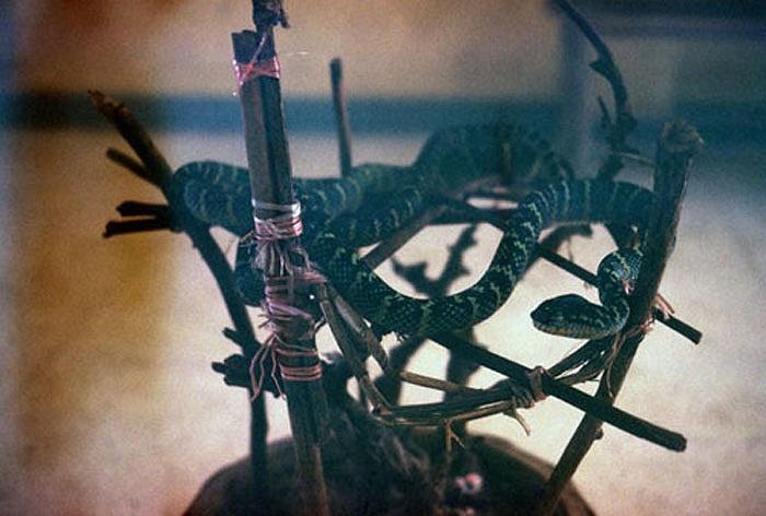 Theo các nhà nghiên cứu, sở dĩ loài rắn tìm đến ngôi đền này trú ngụ nhiều, bởi trong đền lúc nào cũng có sẵn thức ăn của những người dâng cúng.