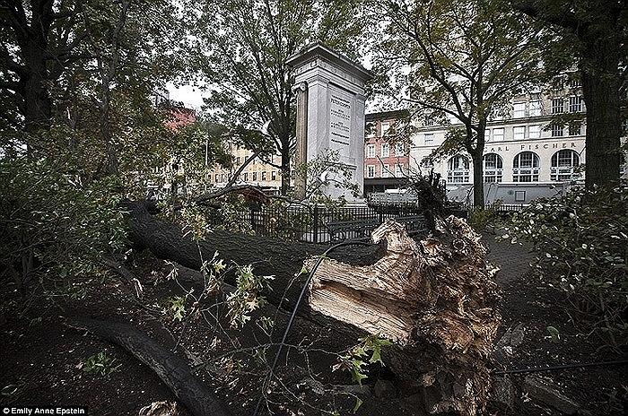 Thân cây bị bật gốc ở East Village, New York sau khi bão Sandy tấn công