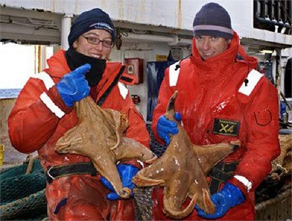 Những con sao biển ở Nam Cực