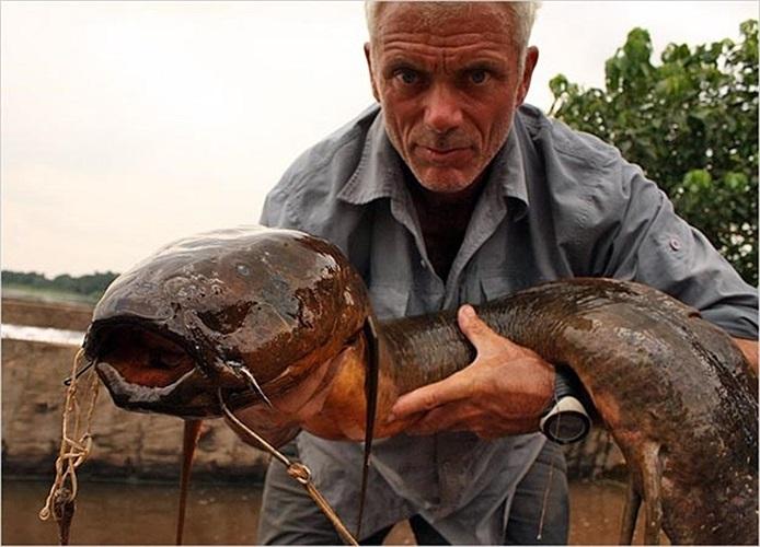 Con cá phổi Lungfish châu Phi là một quái vật với bề ngoài vô cùng xấu xí đáng sợ
