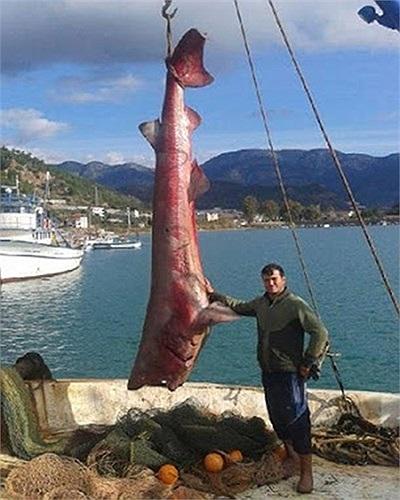 Con cá mập dài 5m, nặng 900 kg được bắt tại Thổ Nhĩ Kỳ