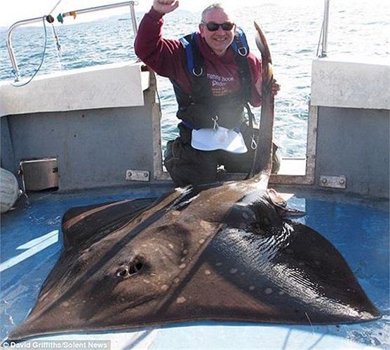 Ông David Griffiths 47 tuổi đã bắt được con cá đuối nặng 106 kg ngoài khơi Oban, Tây Scotland