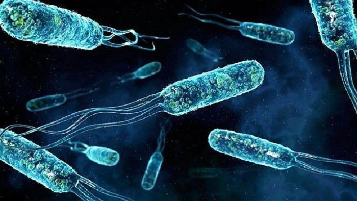 Vi khuẩn đường ruột điển hình với lông roi một đầu dùng để bơi. Tổng khối lượng vi khuẩn trong hệ tiêu hóa của người lên tới 2 kg.