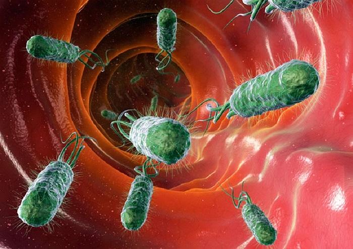 Rõ ràng vi khuẩn có lợi cho con người nếu số lượng của chúng luôn ổn định. Và E.Coli là một ví dụ điển hình trong ruột. Nếu chúng tăng quá nhiều sẽ gây ra bệnh tiêu chảy.