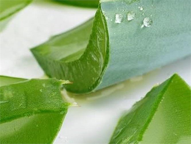 Lô hội có khả năng tạo độ ẩm cho da, giúp da đàn hồi, kích thích sự tổng hợp collagen, ngăn chặn quá trình lão hóa, làm giảm viêm và đẩy nhanh quá trình chữa sẹo mụn.