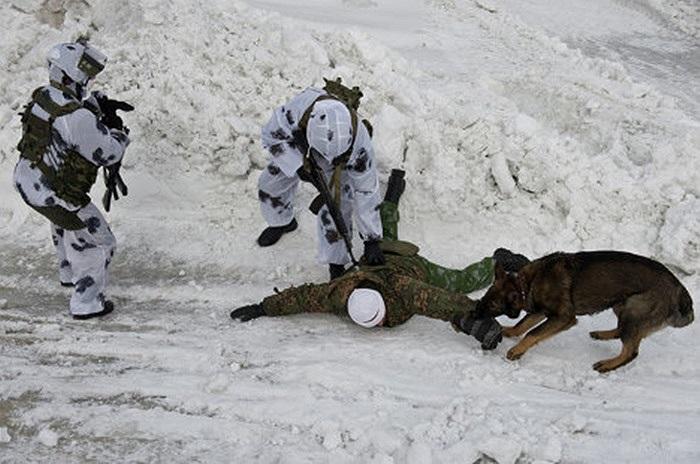 Cảnh sát đặc nhiệm Nga dắt theo chó nghiệp vụ tập bắt giữ tay súng và giải cứu con tin
