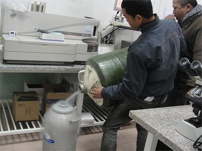 Ni tơ được đổ vào thùng bảo quản tinh trùng.