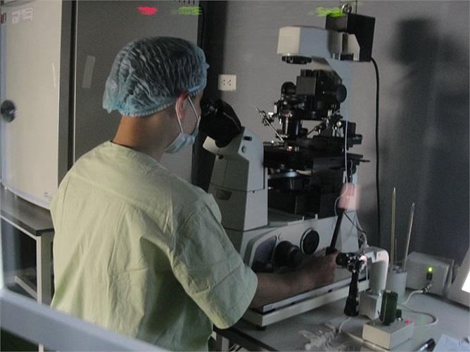 Chuyên gia này đang thực hiện thao tác đưa tinh trùng vào trứng.