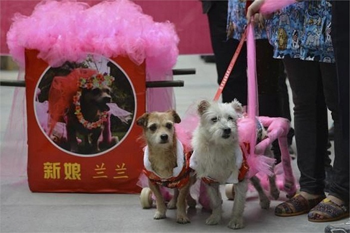 Hình ảnh vợ chồng chó ở Trung tâm Cứu trợ động vật Thành Đô ngày 18/10.