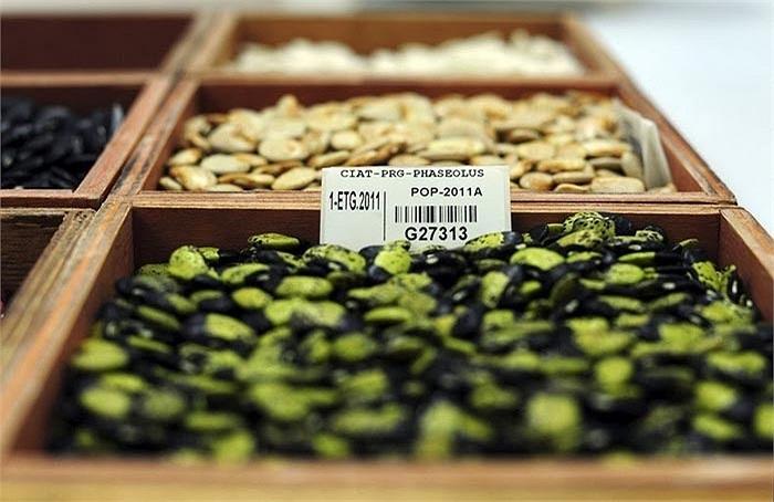 Tính đến tháng 3/2013, số hạt giống được thu thập đã là 770.000 chủng loại khác nhau