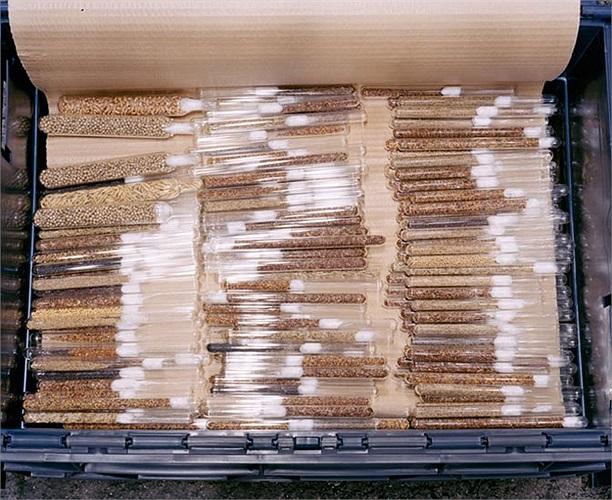 Nếu may mắn con người sẽ không bao giờ phải sử dụng nguồn hạt giống trong căn hầm để tái tạo cuộc sống mới. Khả năng lưu trữ của Svalbard Global Seed Vault tới 4,5 triệu giống với 2 tỷ hạt đủ cho con người đến hàng ngàn năm.