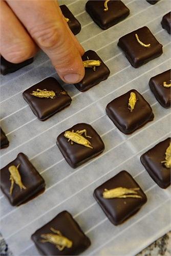 Các côn trùng chủ yếu trong món socola này là dế và sâu.