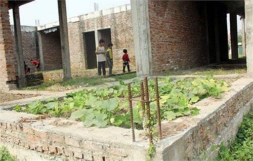 Người dân thấy lãng phí, nên đành lấy nền nhà làm chỗ trồng rau, phục vụ sinh hoạt.