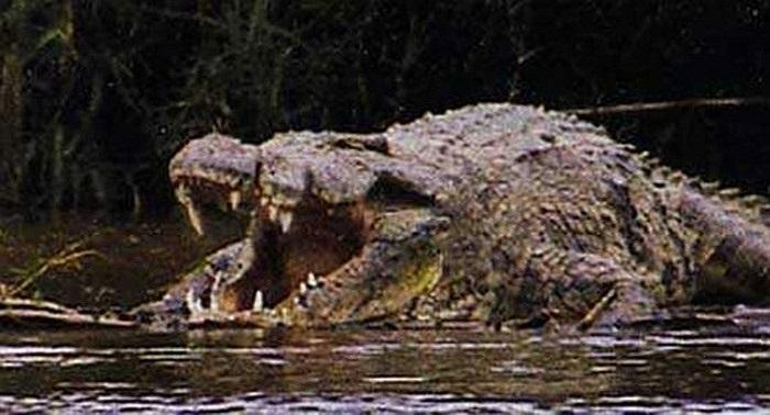 Hầu như tất cả những con ác thú ăn thịt người đều không hoành hành được lâu, sau khi 'tác oai tác quái' một thời gian ngắn, chúng sẽ bị người dân địa phương tiêu diệt