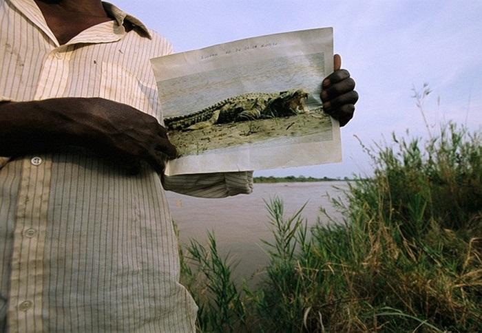 Gustave là 1 cái tên nổi tiếng ở Burundi không phải vì kích cỡ của nó mà là vì con cá sấu này đã giết hơn 300 mạng người ở nơi đây