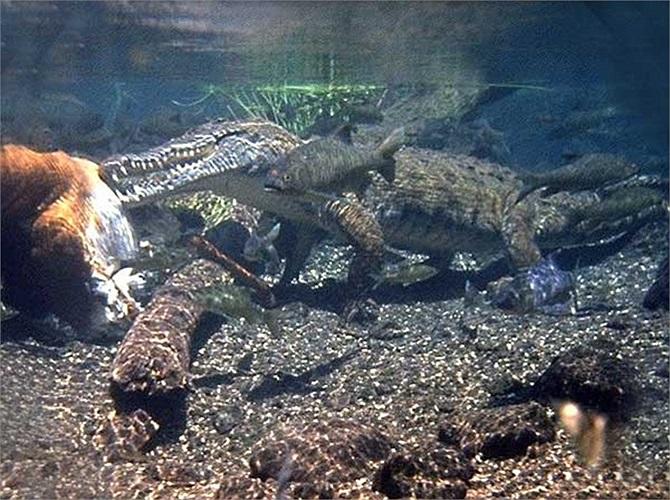 Ban đầu con cá sấu Gustave sống một cái ao nhỏ tại một ngôi làng ở Burudi nơi mà nạn diệt chủng liên tiếp xảy ra trong thời gian đó