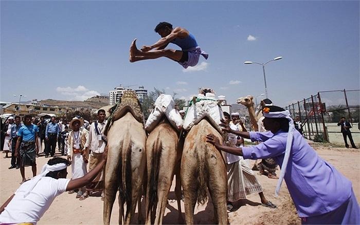 Cuộc thi nhảy qua lưng lạc đà trong lễ hội mùa hè ở Sanaa, Yemen