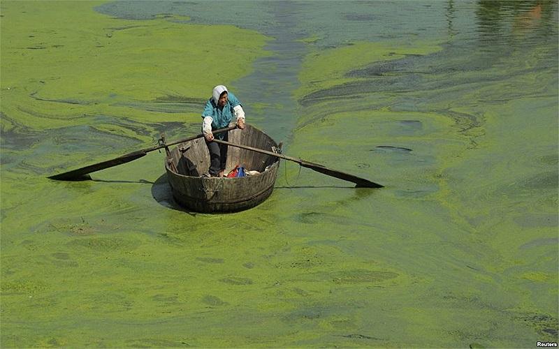 Người đánh cá chèo thuyền trong một hồ có nhiều rêu ở thành phố Hợp Phì, tỉnh An Huy, Trung Quốc