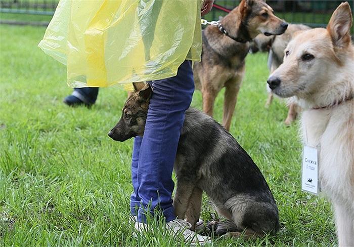 Chú chó đang chờ chủ của mình đến đón sau khi bị lạc ở Moscow, Nga