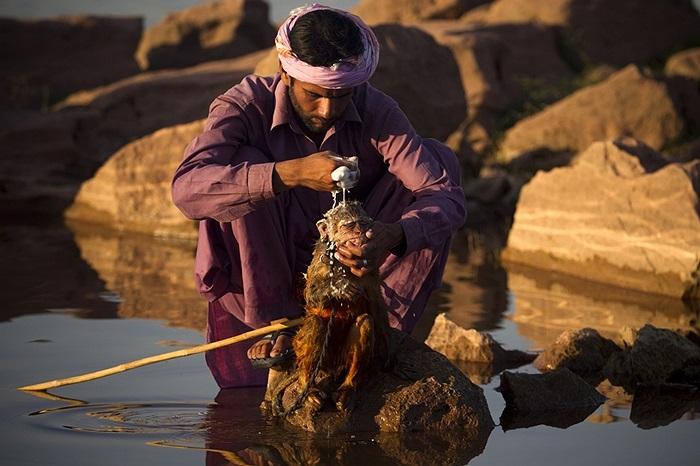 Người đàn ông tắm mát cho chú khỉ của mình tại Islamabad, Pakistan