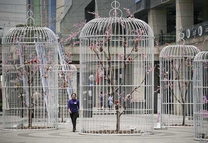 Một phụ nữ đi ngang qua vườn cây và chim nhân tạo ở Nam Kinh, Giang Tô, Trung Quốc