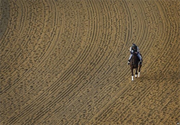 Chú ngựa Itsmyluckyday, do nài Peter Shelton điều khiển đang đi dạo trên sân đua ở thành phố Baltimore, Maryland, Mỹ