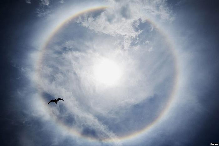 Chú chim bay ngang qua quầng sáng lạ của mặt trời tại thành phố Seaside Heights, bang New Jersey, Mỹ