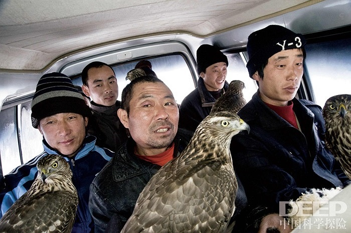 Trước đây, những người nuôi chim ưng đi cưỡi ngựa đi săn thì bây giờ họ đi săn bằng ô tô