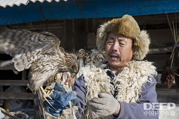Người nuôi chim bỏ đói chim ưng và buộc chúng vào một cái cột, sau đó đặt những miếng thịt bò, chuột,.v.v lên tay nhằm tạo thói quen cho chúng