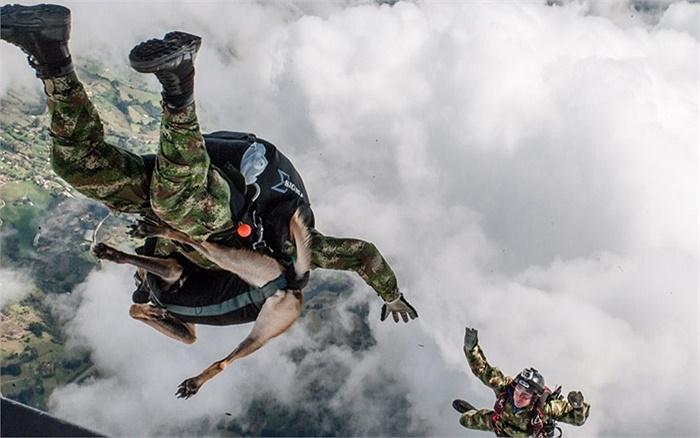 Nhảy từ độ cao 1.000 ft cùng với chó của một đơn vị quân sự Bỉ