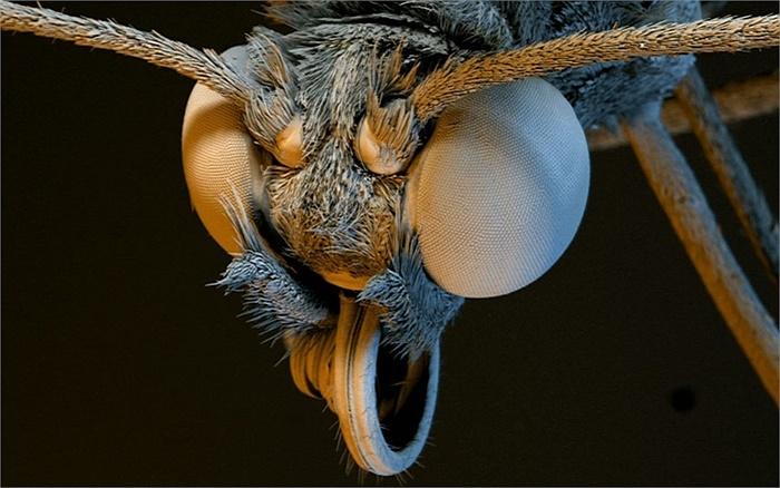 Bướm Glasswinged với góc nhìn qua kính hiển vi