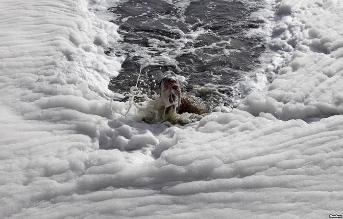 Người đàn ông bơi trong sông Yamuna ở New Delhi, Ấn Độ
