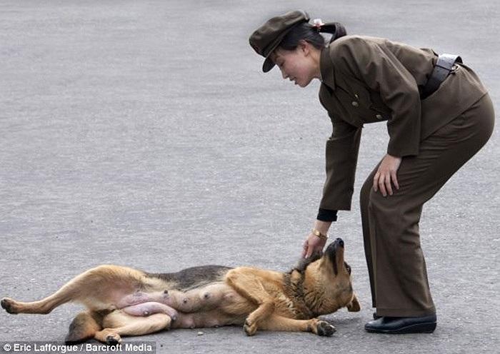Nữ binh sĩ đang trêu đùa một chú chó