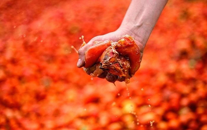 Cà chua được ép cho mềm trước khi ném để giảm tác động với người bị ném trúng